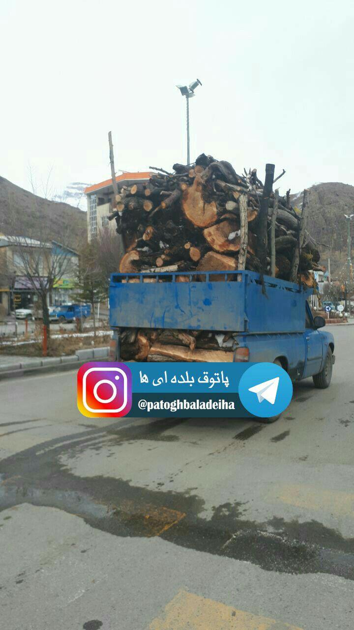 مجوز برای قطع درخت
